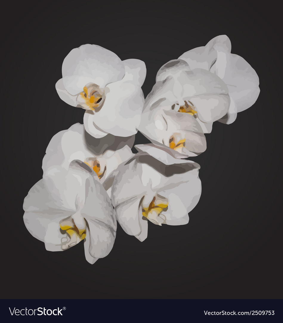 Romantic beautiful orchids blossom isolated on vector | Price: 1 Credit (USD $1)