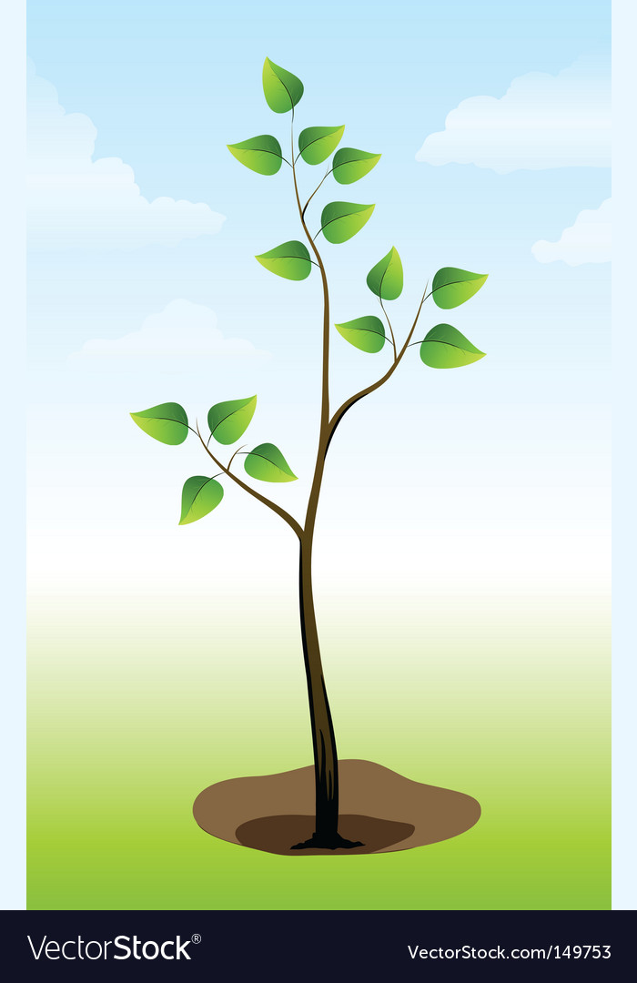 Tree plant on the ground vector | Price: 1 Credit (USD $1)