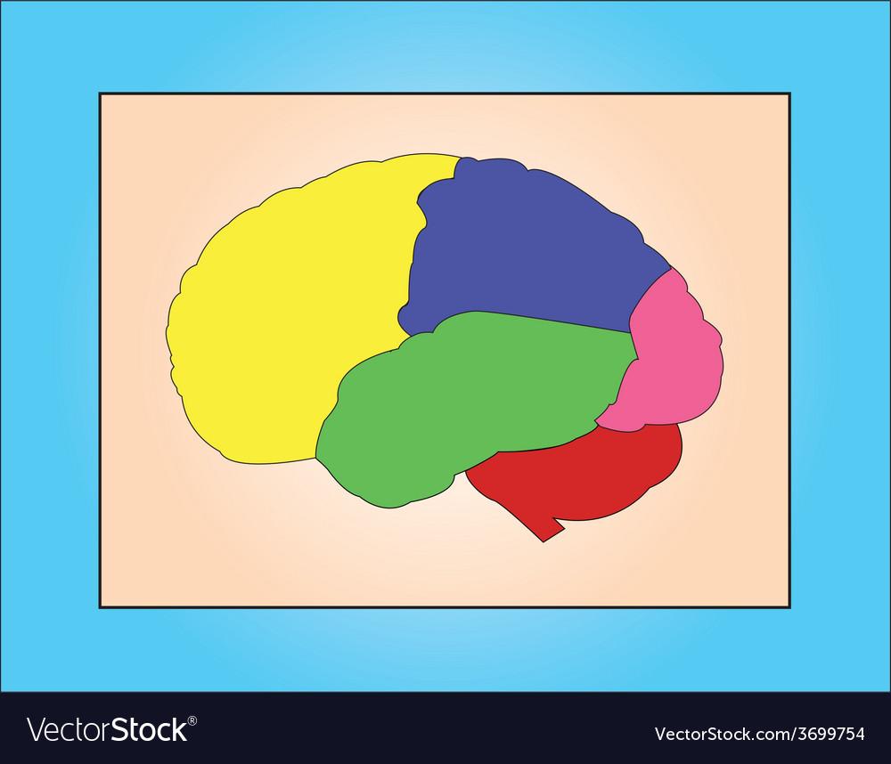Brain samples vector | Price: 1 Credit (USD $1)