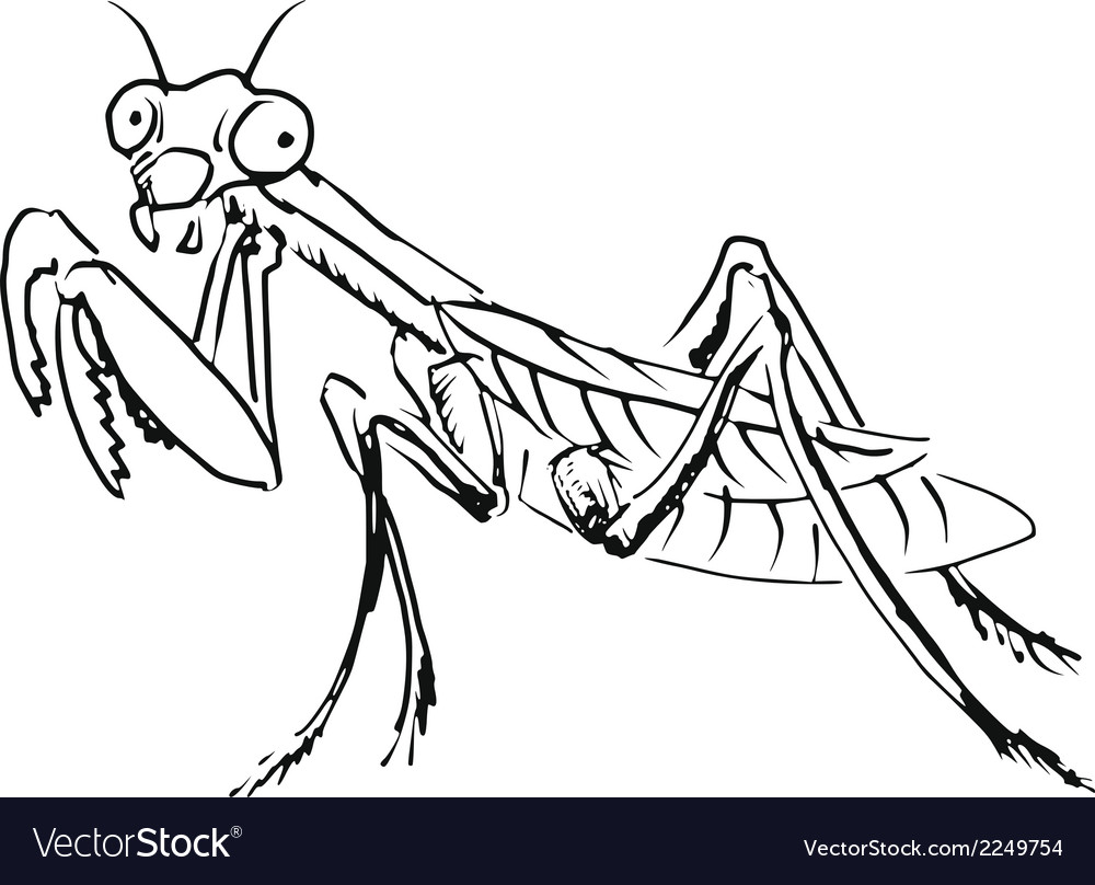 Mantis vector | Price: 1 Credit (USD $1)