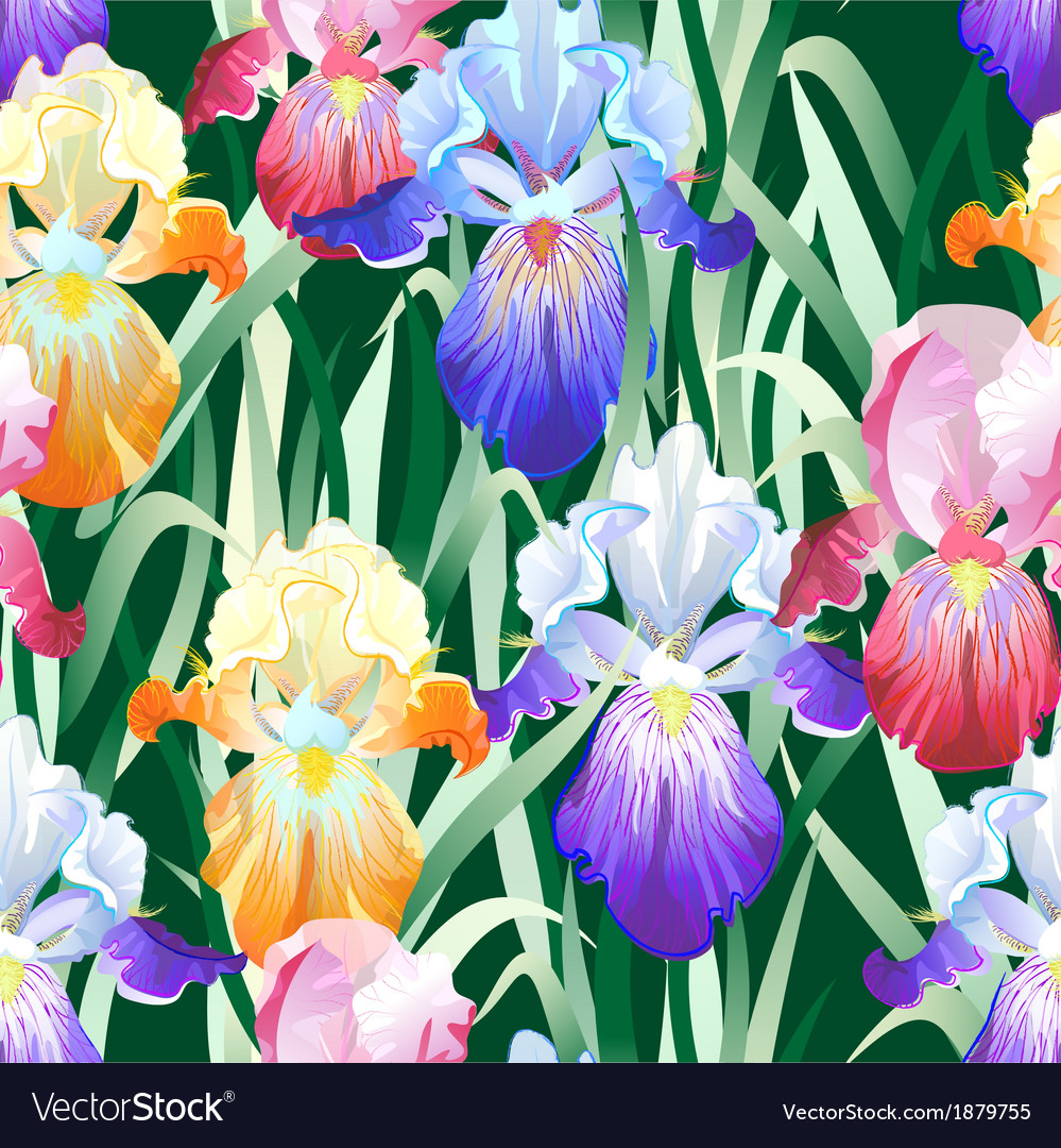 Seamless background with multicolored iris flowers vector | Price: 1 Credit (USD $1)