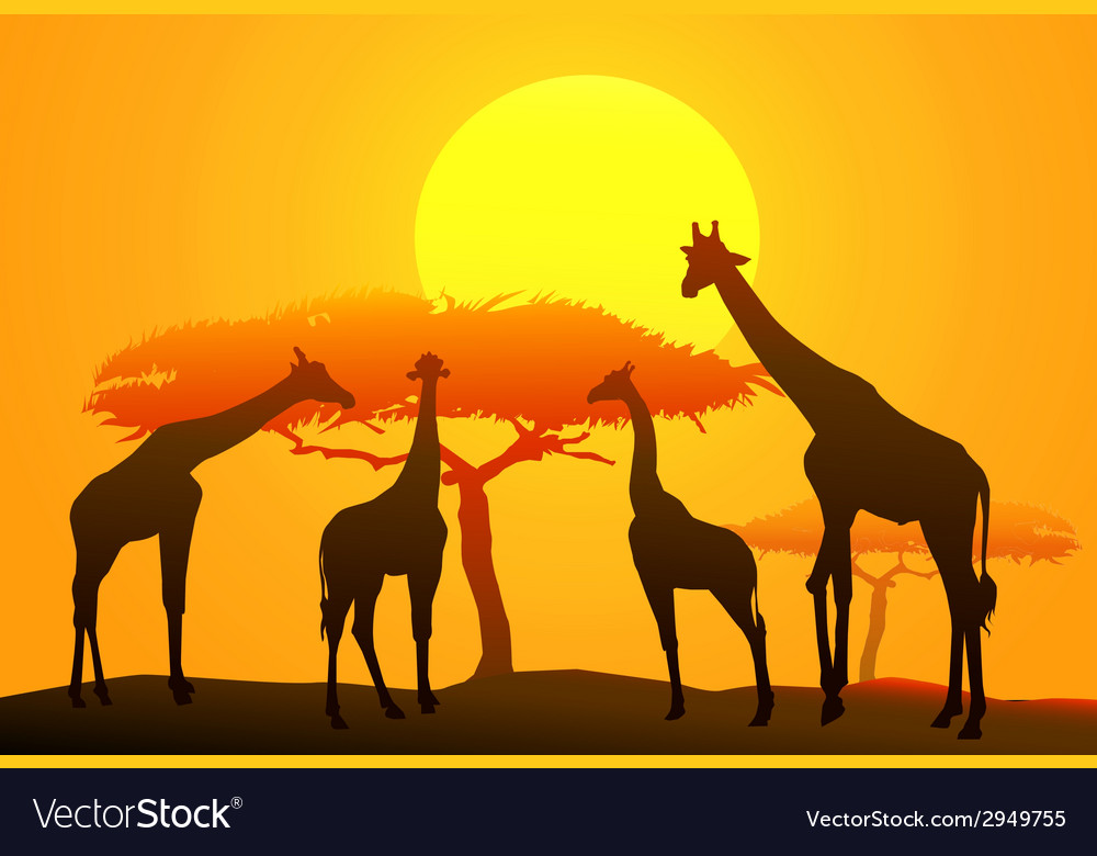 Sunset and giraffe in africa vector | Price: 1 Credit (USD $1)