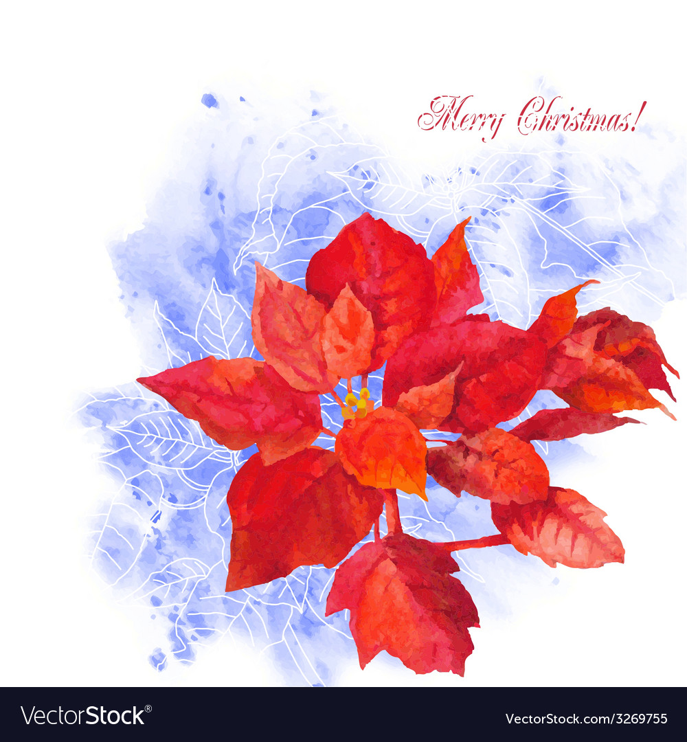 Watercolor background with poinsettia flowers-03 vector | Price: 1 Credit (USD $1)