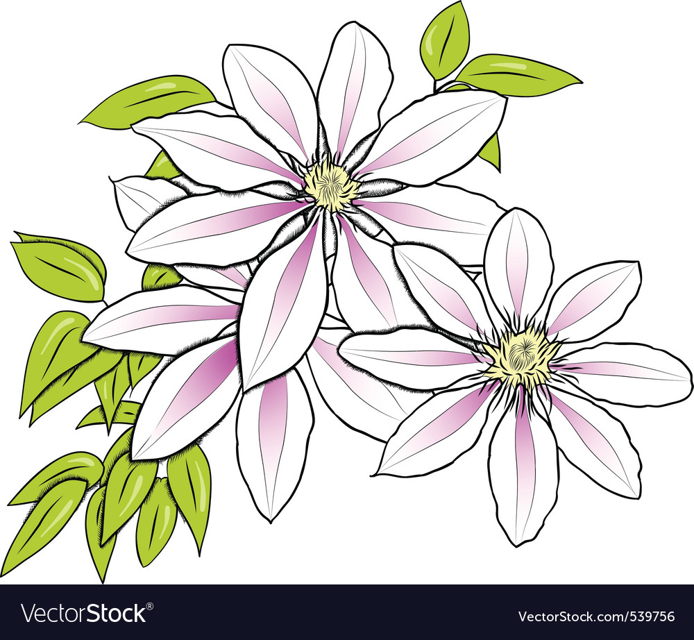 Flower on the white background vector | Price: 1 Credit (USD $1)