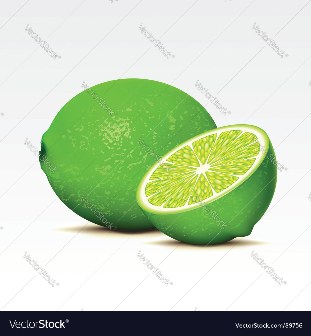 Limes vector | Price: 1 Credit (USD $1)