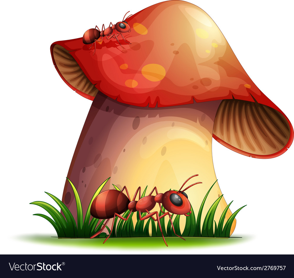 Closeup mushroom vector | Price: 1 Credit (USD $1)