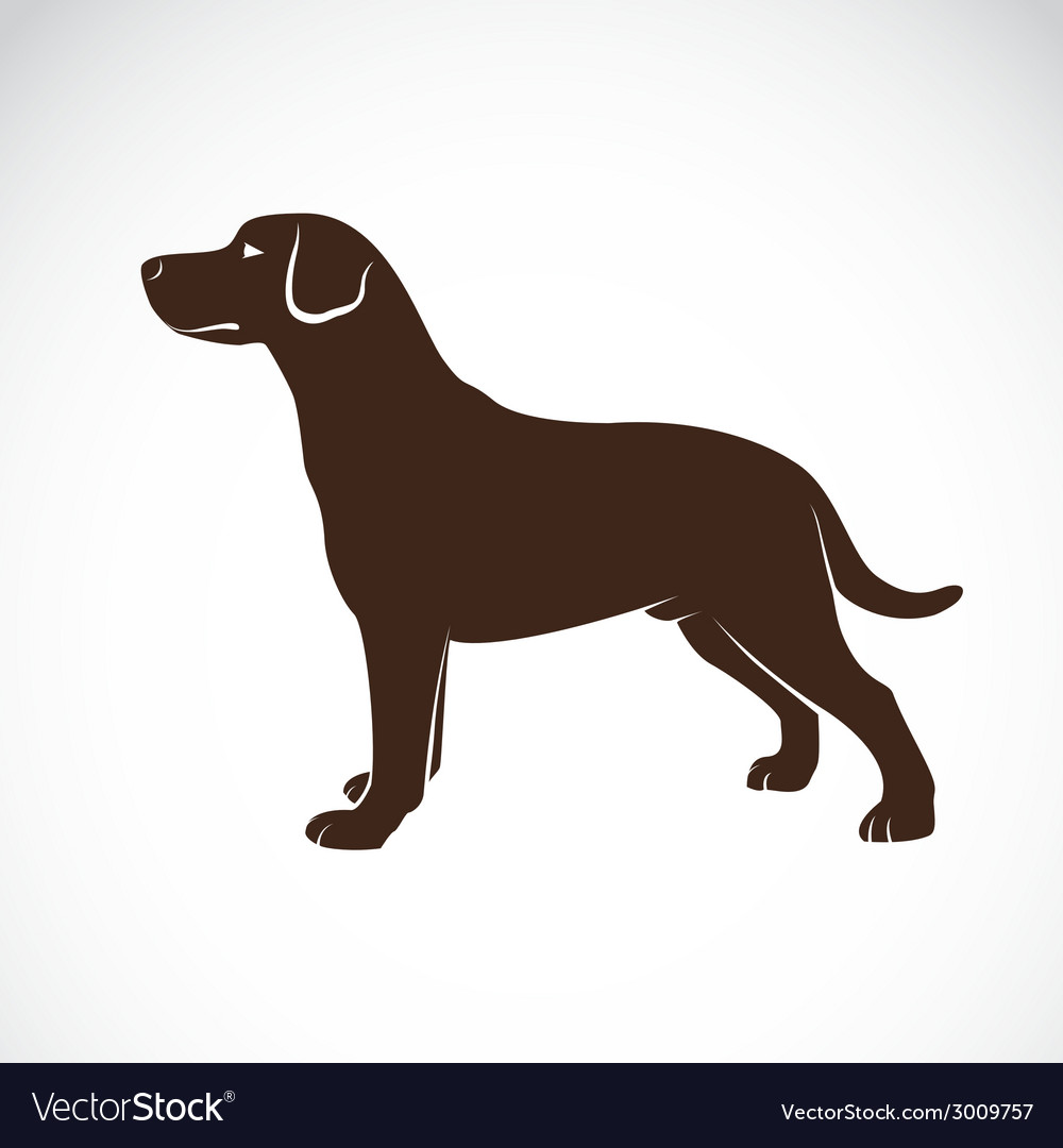 Image of an dog labrador vector | Price: 1 Credit (USD $1)