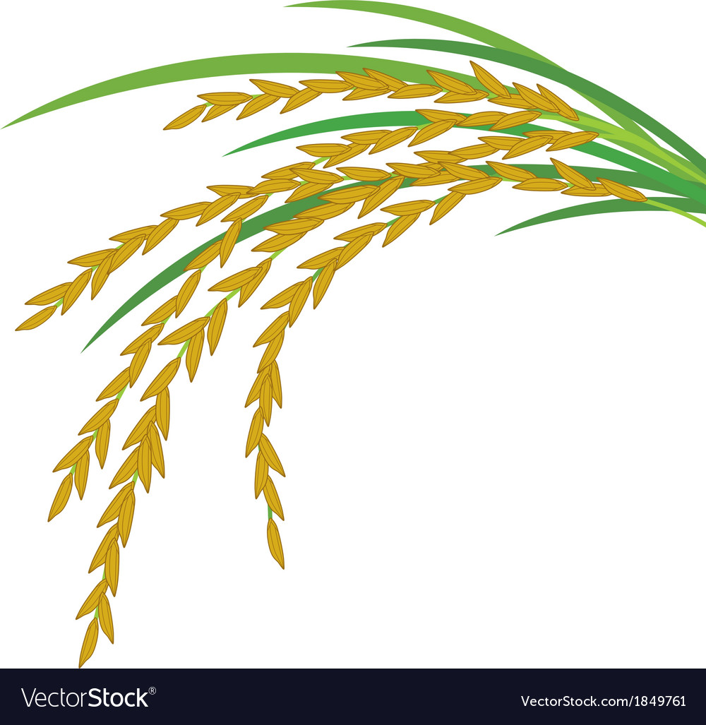 Rice design on white background vector | Price: 1 Credit (USD $1)