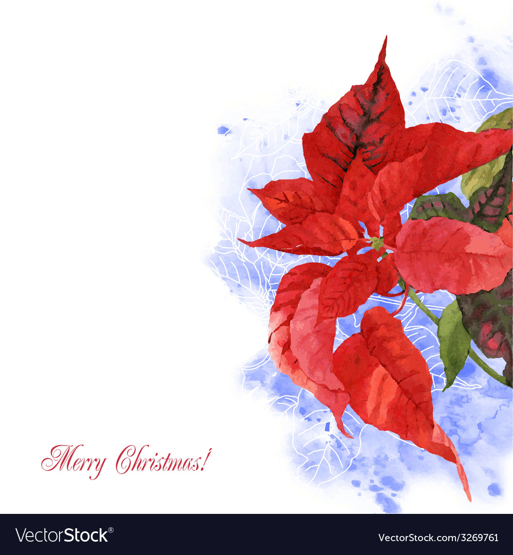 Watercolor background with poinsettia flowers-06 vector | Price: 1 Credit (USD $1)