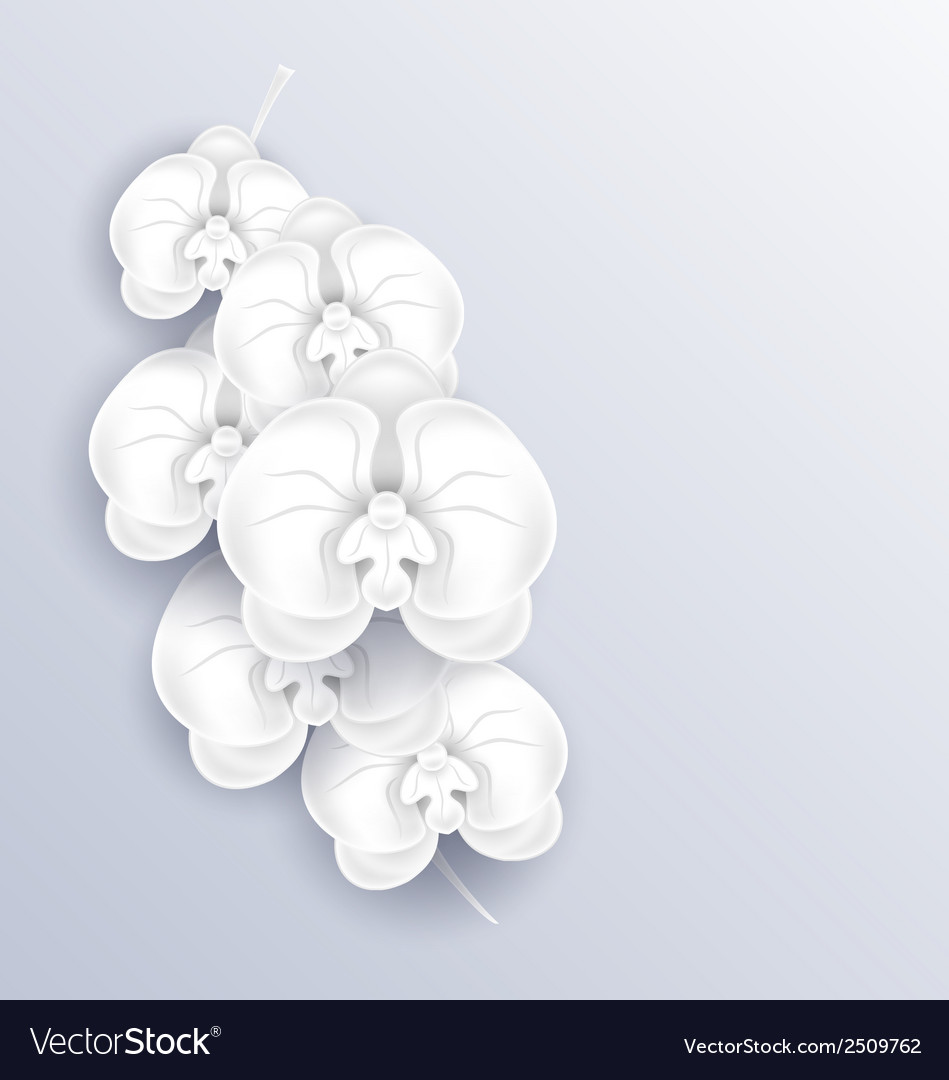 Brunch of beautiful orchids paper craft template vector | Price: 1 Credit (USD $1)