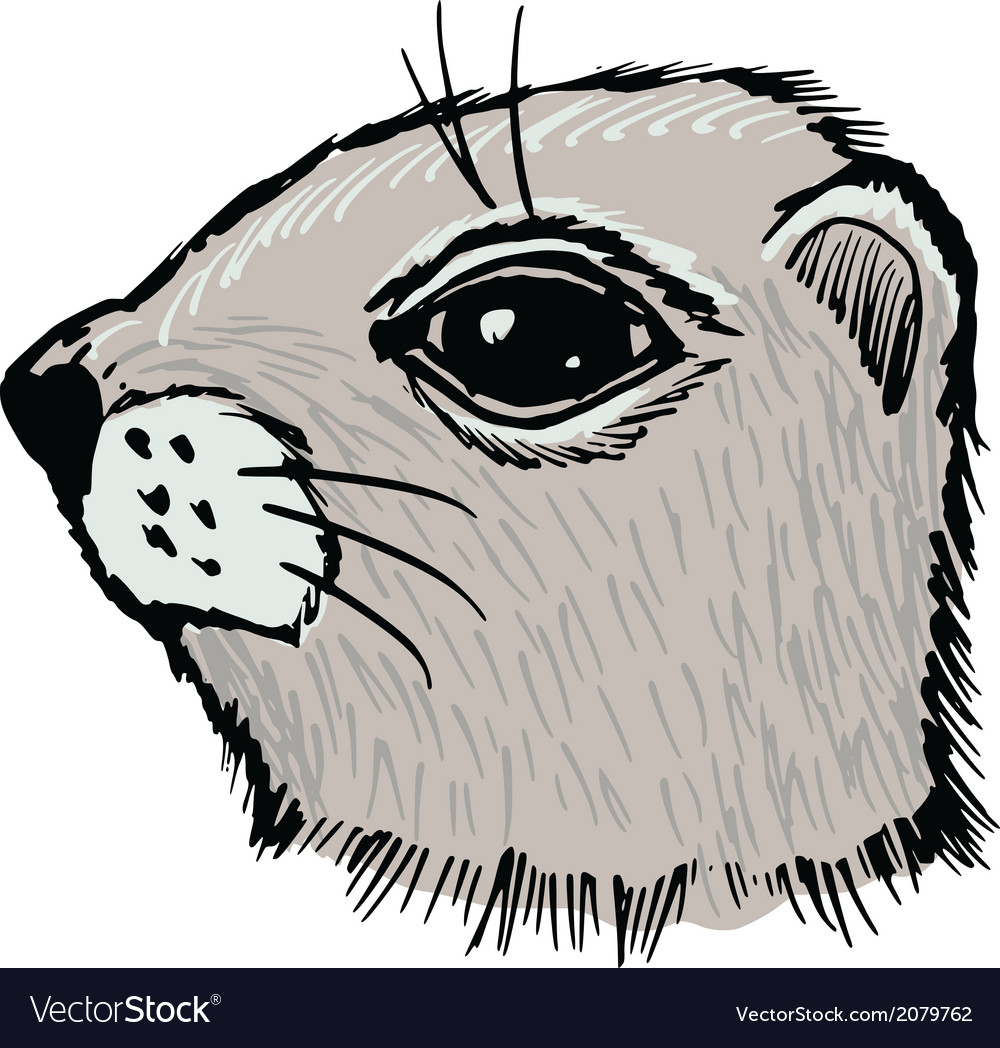 Gopher vector | Price: 1 Credit (USD $1)