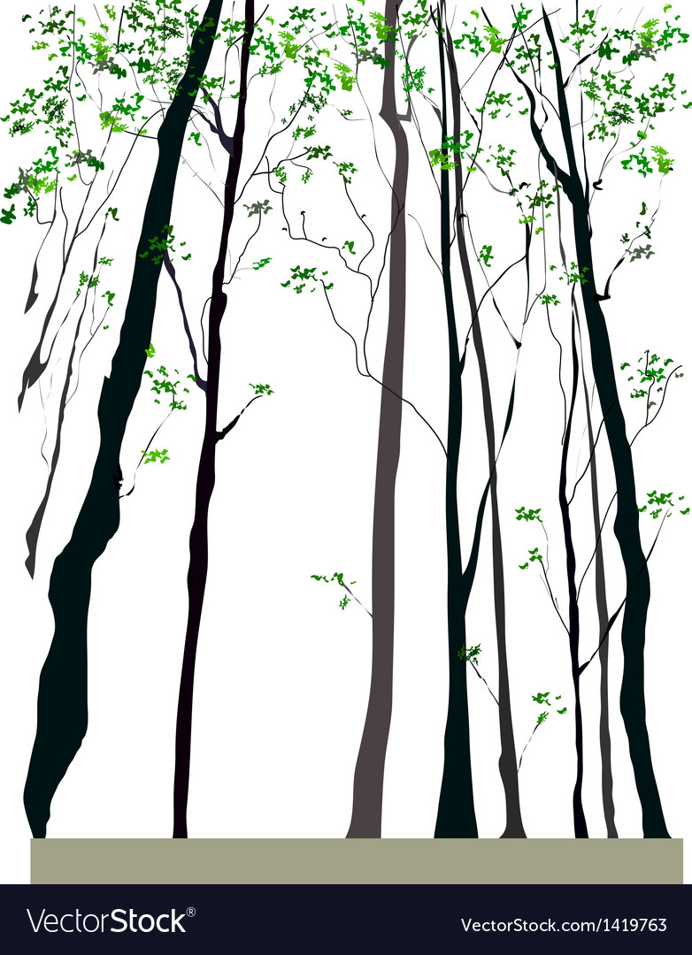 Tree forest vector | Price: 1 Credit (USD $1)