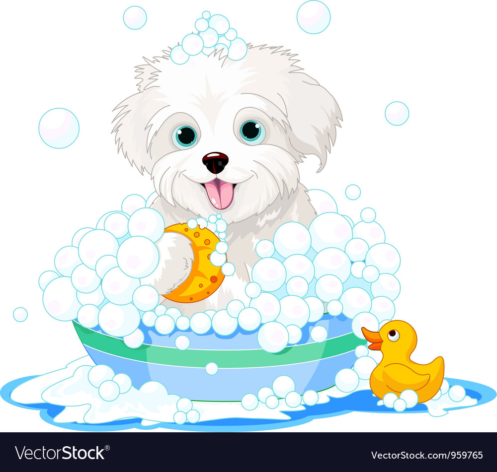 Fluffy dog having a bath vector | Price: 3 Credit (USD $3)