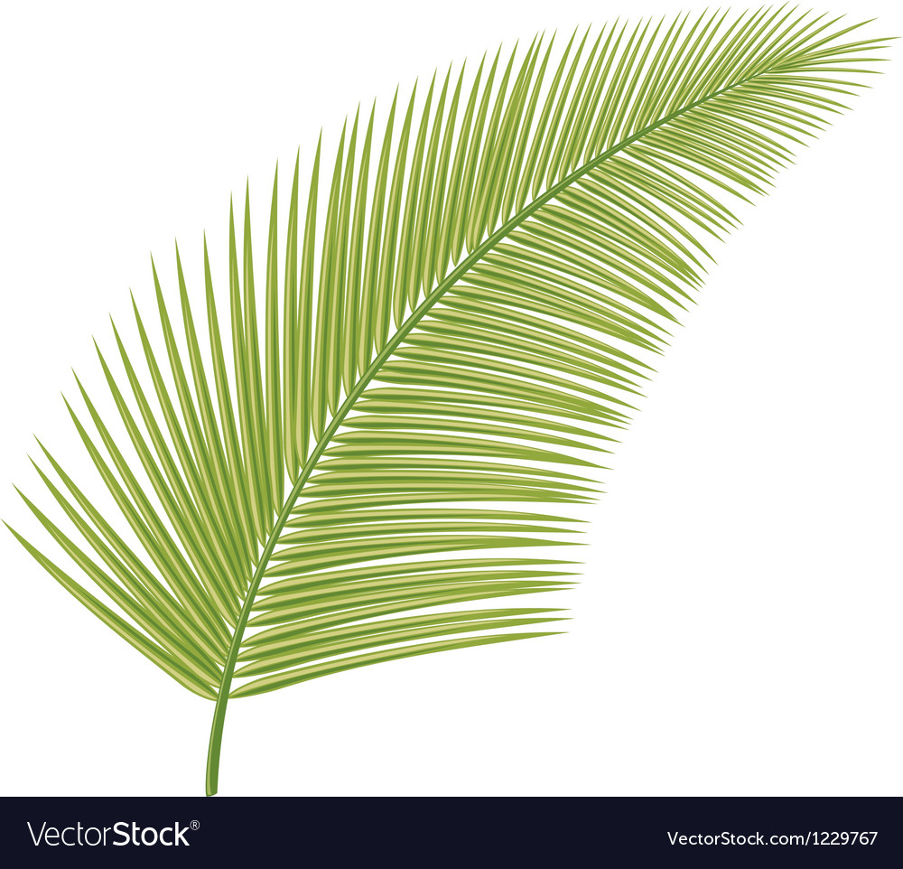 Palm leaf vector | Price: 1 Credit (USD $1)
