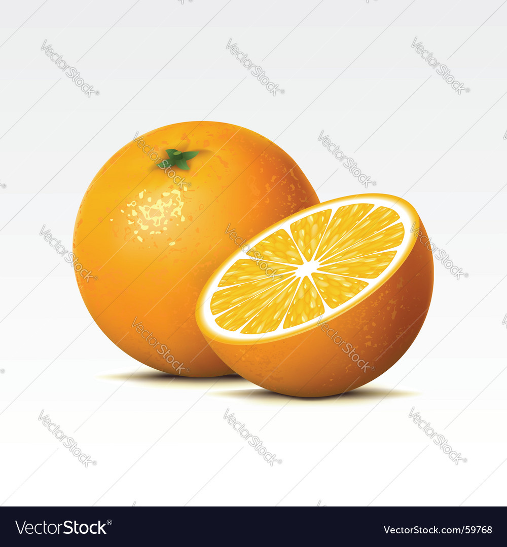 Orange vector | Price: 3 Credit (USD $3)
