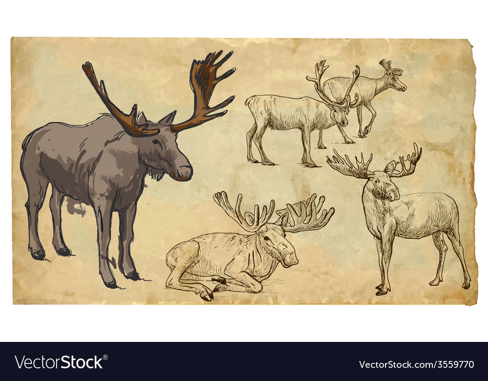 Animals theme reinder  hand drawn pack vector