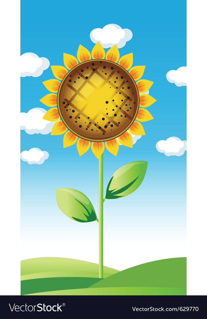 Sunflower summer landscape vector | Price: 1 Credit (USD $1)
