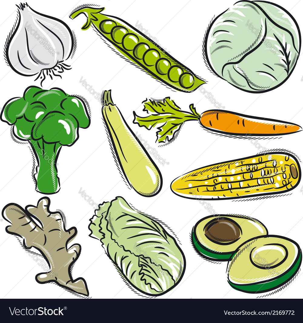 Set of vegetable garlic peas cabbage vector | Price: 1 Credit (USD $1)