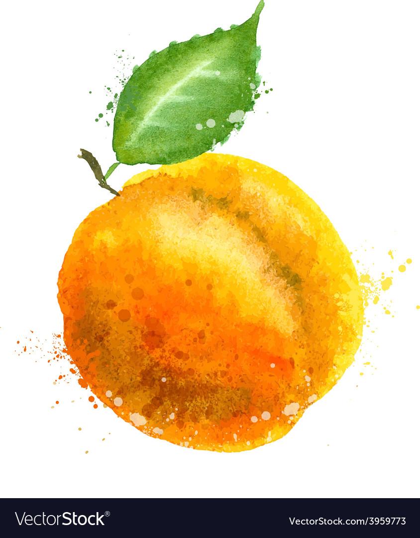 Apricot logo design template peach or vector | Price: 1 Credit (USD $1)