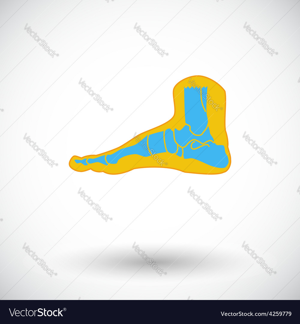 Foot anatomy icon vector | Price: 1 Credit (USD $1)