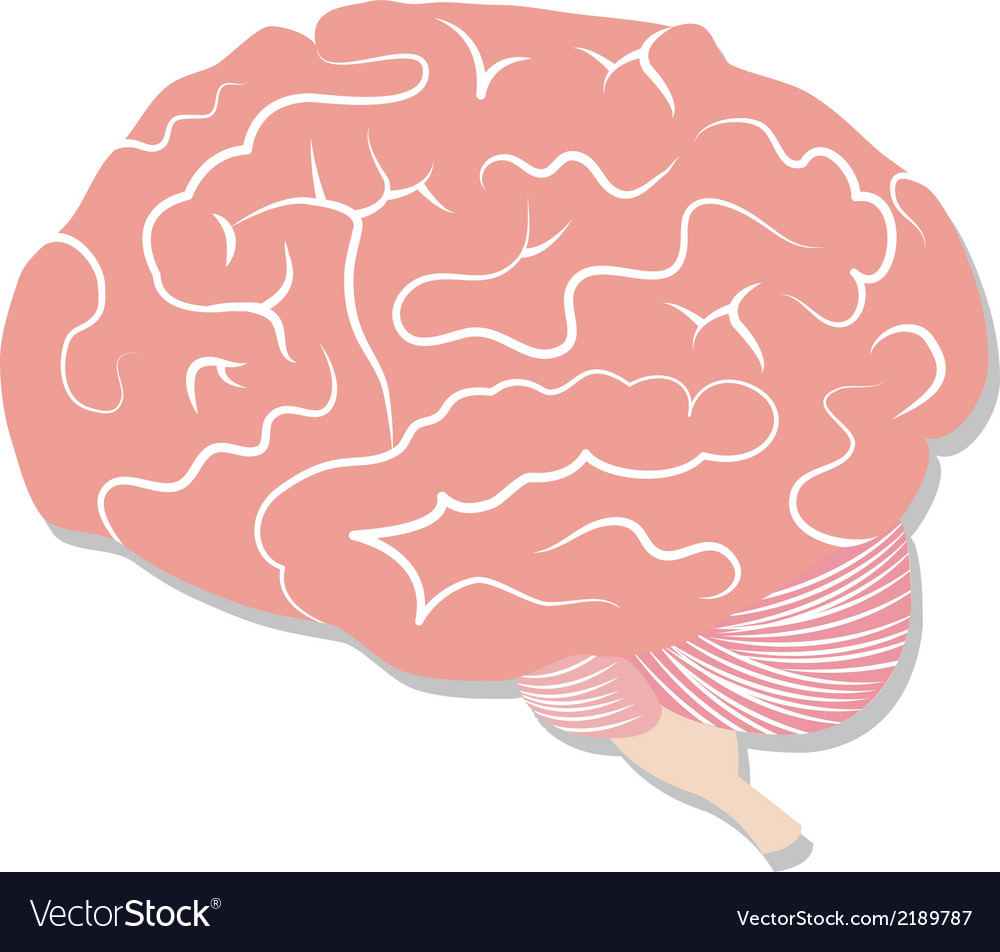 Brain on white background vector | Price: 1 Credit (USD $1)