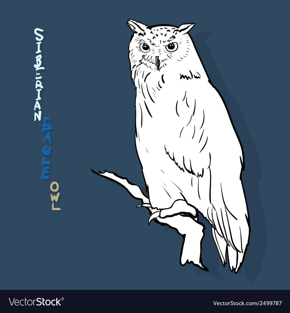 Siberian eagle owl or bubo bubo sibiricus vector | Price: 1 Credit (USD $1)