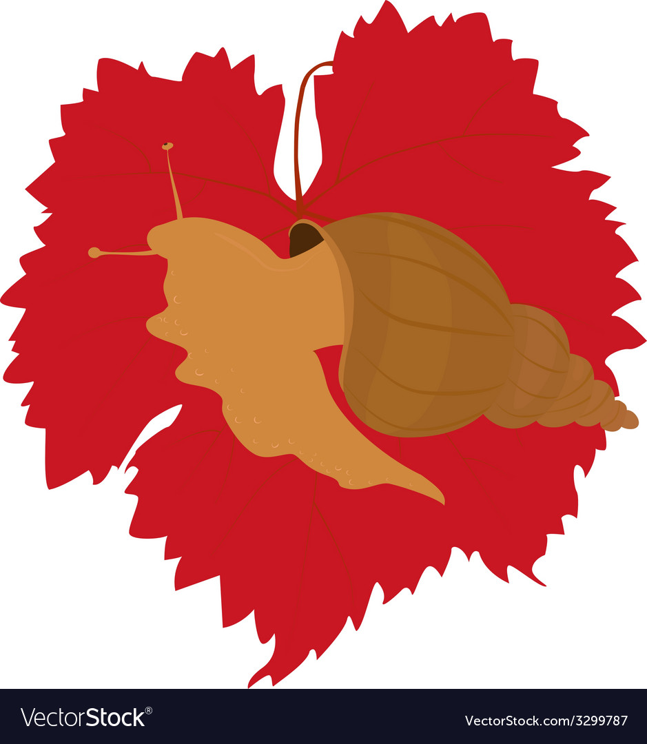 Snail on grape leaf vector | Price: 1 Credit (USD $1)