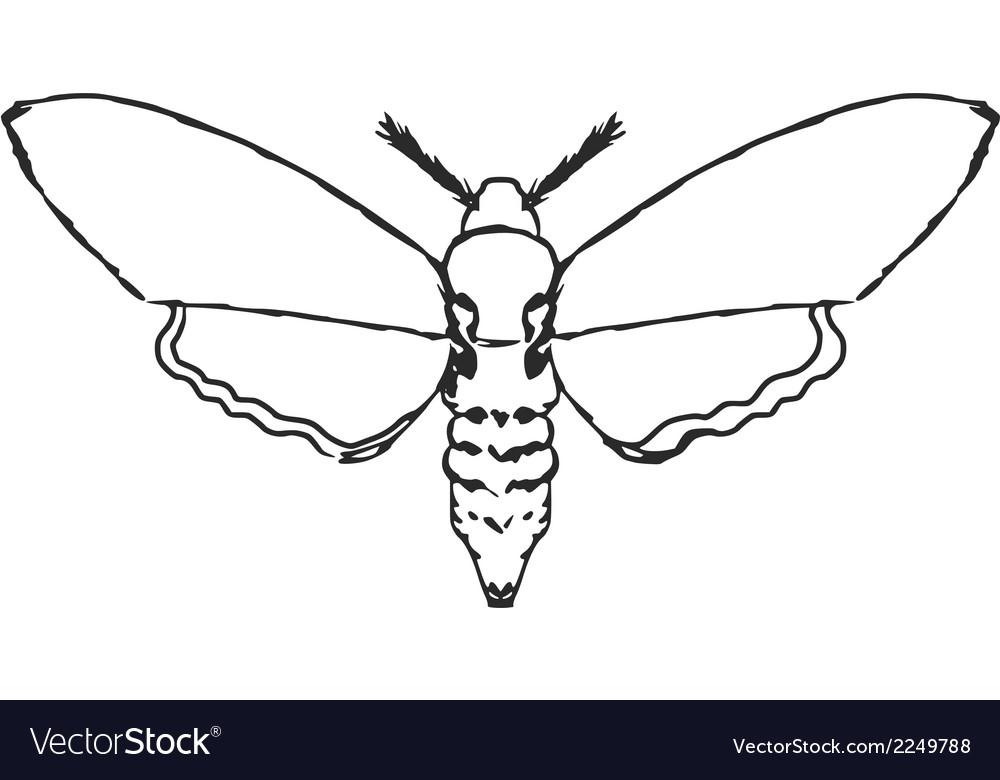 Moth vector | Price: 1 Credit (USD $1)