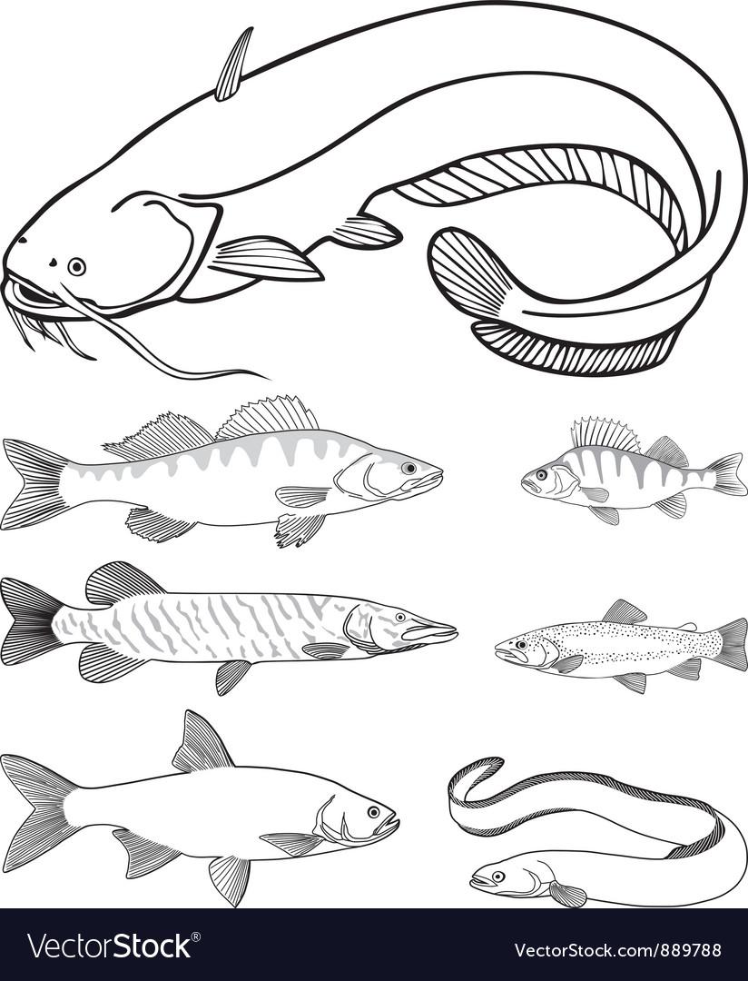 Predatory freshwater fish vector | Price: 1 Credit (USD $1)