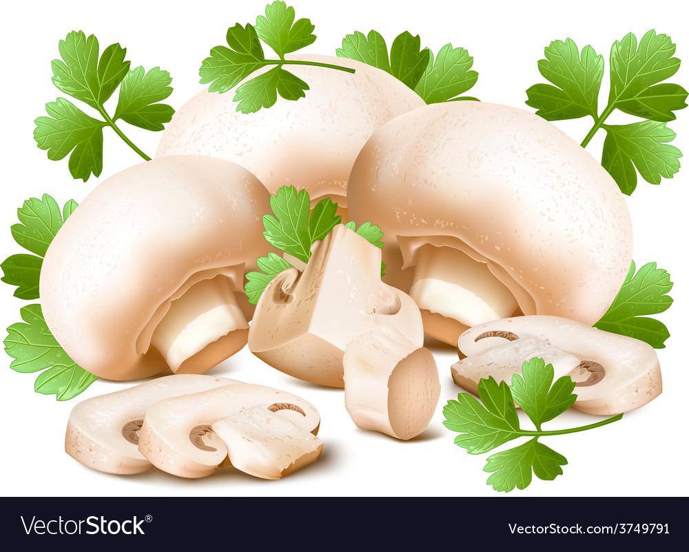 Mushrooms with parsley vector | Price: 3 Credit (USD $3)