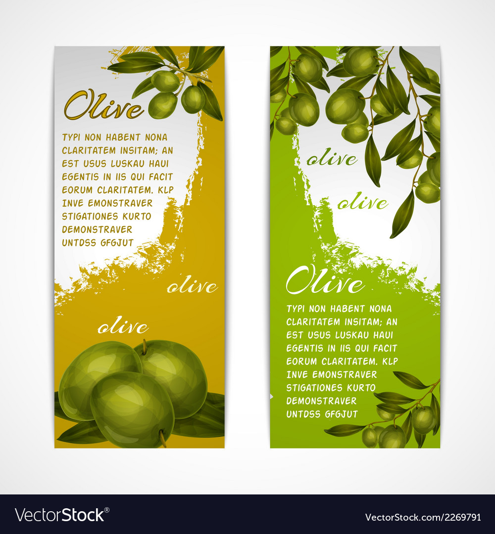 Olive vertical banners vector | Price: 1 Credit (USD $1)