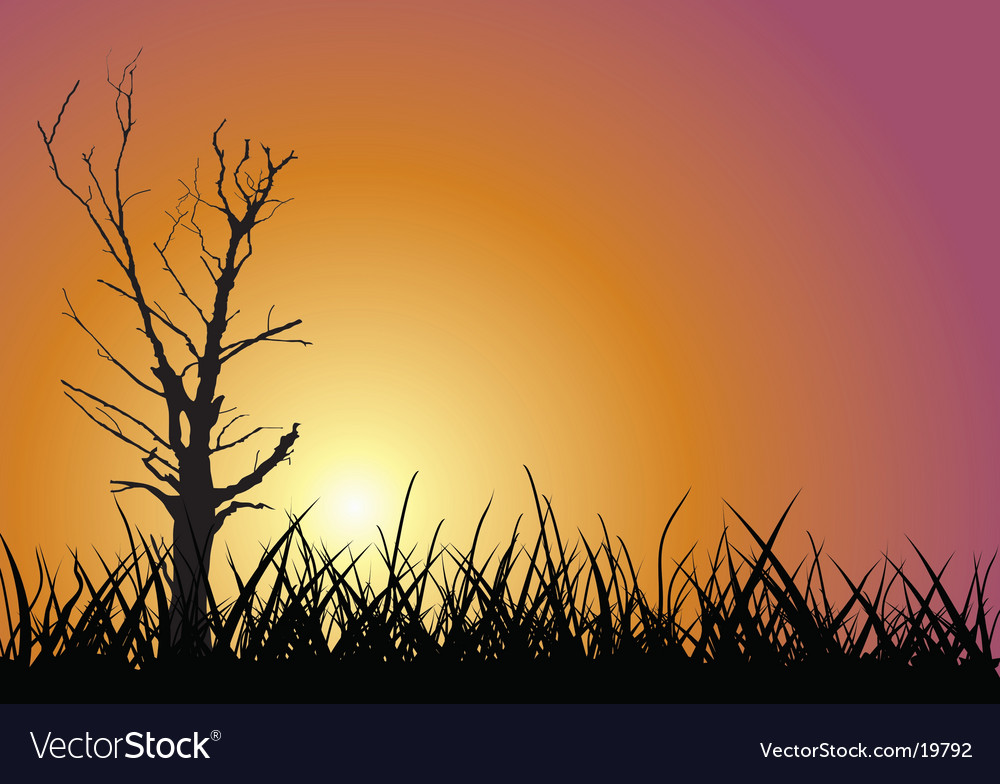 Tree outline on sunset background vector | Price: 1 Credit (USD $1)
