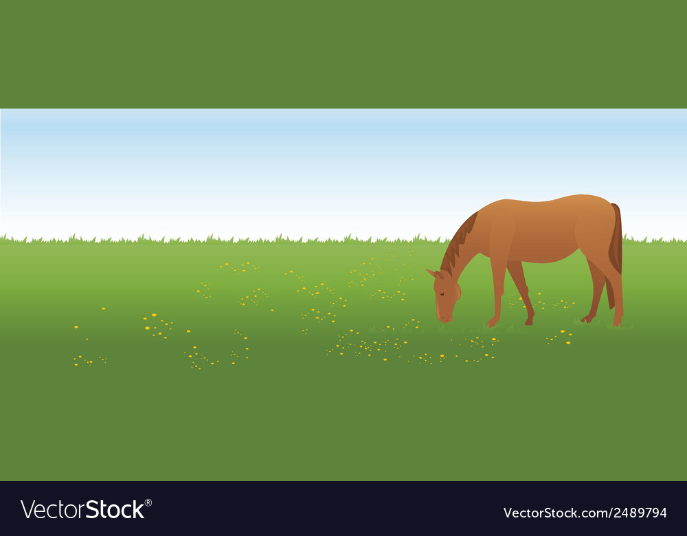 Horse on the meadow vector | Price: 1 Credit (USD $1)