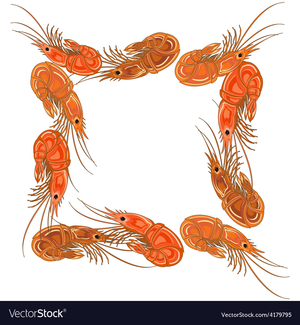 Frame made from prepared shrimps on white vector | Price: 1 Credit (USD $1)