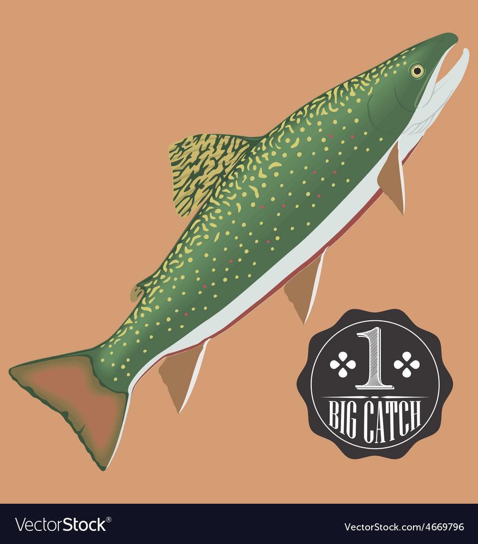 Salmon fish vector | Price: 1 Credit (USD $1)