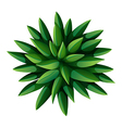 A topview of a green landscaping plant vector