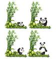 Panda and bamboo vector