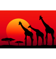 African safari at sunset vector