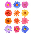 Various colorful flower vector