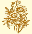 Bright yellow flowering tagetes vector