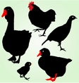Collection of silhouettes of ferme birds vector