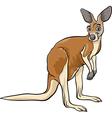 Kangaroo animal cartoon vector