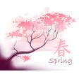 Beautiful sacura spring cherry vector