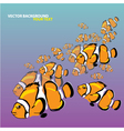 Clown fish background vector
