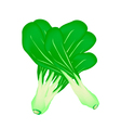 Fresh green baby pakchoi on white background vector