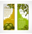 Olive vertical banners vector