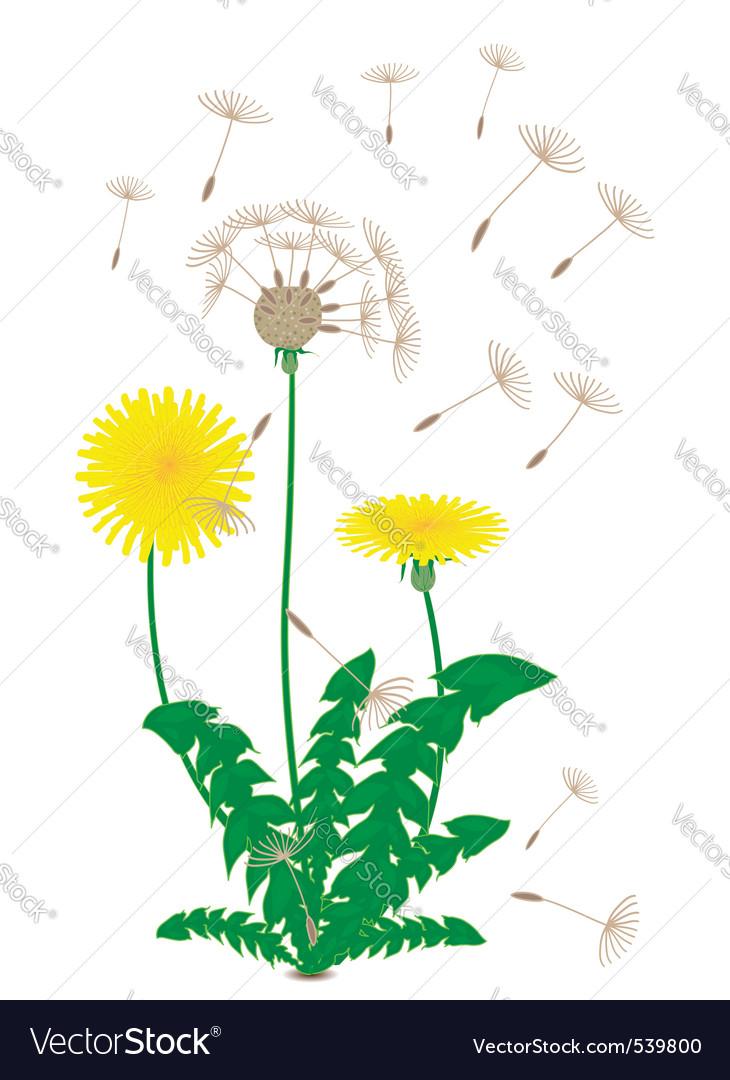 Dandelion vector | Price: 1 Credit (USD $1)