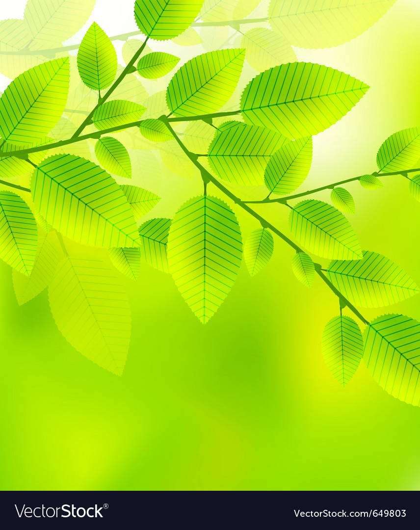 Fresh green leaves abstract background vector | Price: 1 Credit (USD $1)