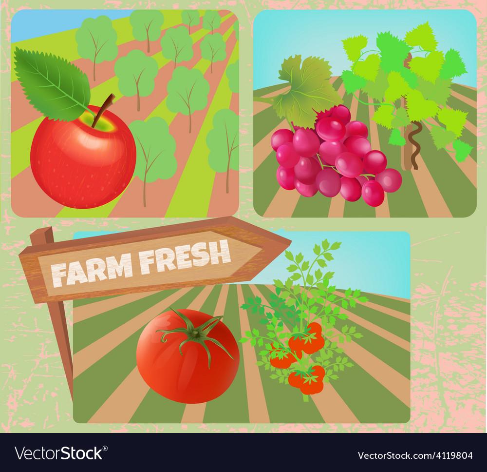 Farm fresh vector | Price: 3 Credit (USD $3)