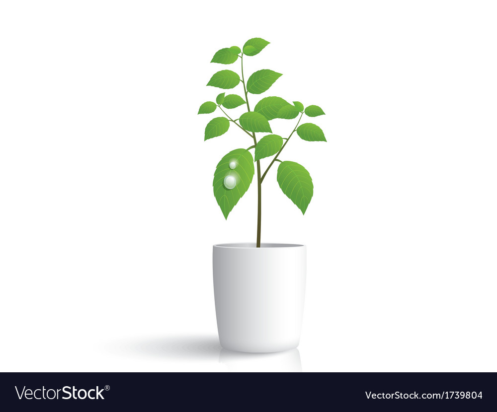 Plant in white pot vector | Price: 1 Credit (USD $1)